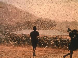 800-Locusts